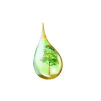Nhận biết tinh dầu được pha cồn hoặc dầu thực vật